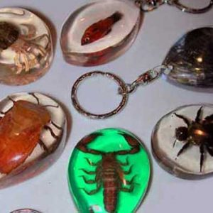 Insect Keyrings
