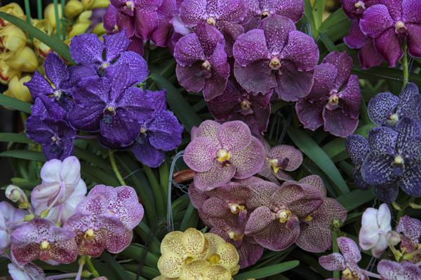 bangkok-orchids-40